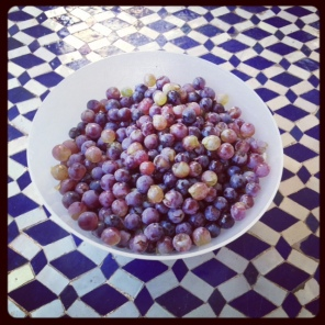 Homegrown Grapes @CasaCalistemon